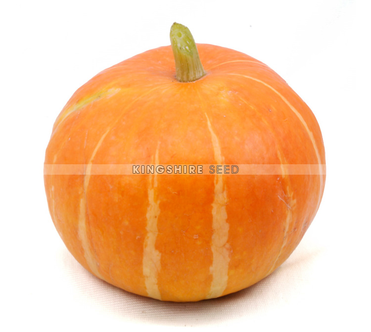 Sweet Round Orange Hybrid Pumpkin Seed